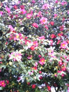 冬に咲く花もある